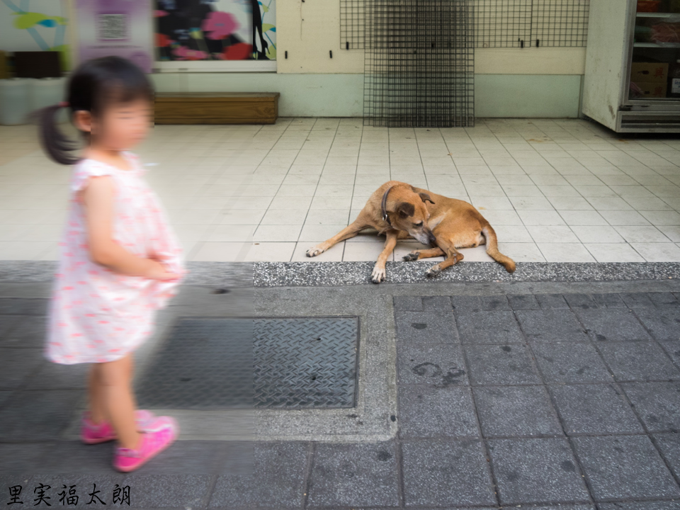 台北_雙城街の犬