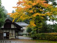濱田庄司の自邸・工房の黄葉