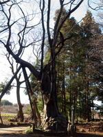 201020100101-81_0002-2.jpg