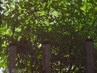 201205_107.jpg