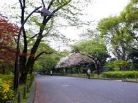 640-2011040014.jpg